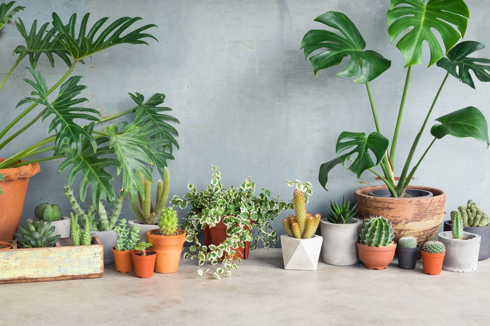 18 Beautiful Ways of Decorating with Plants - Rhythm of the Home