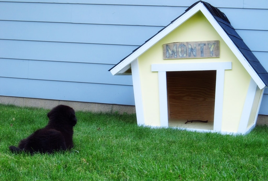 How to Build a Dog House - Rhythm of the Home Ranch Dog House Plans on ranch mansions, southern brick home plans, mediterranean style home plans, ranch blueprints, large family home plans, l-shaped range home plans, rustic home plans, 3 car garage ranch plans, luxury home plans, custom home plans, 1 600 sf ranch plans, ranch horses, cabin plans, log home plans, ranch decks, new ranch style home plans, patio home plans, rambler style home plans, floor plans, ranch remodel before and after,