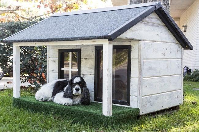How To Build A Dog House Rhythm Of The Home
