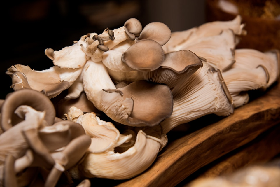 How to Grow Mushrooms in Your Garden - Rhythm of the Home